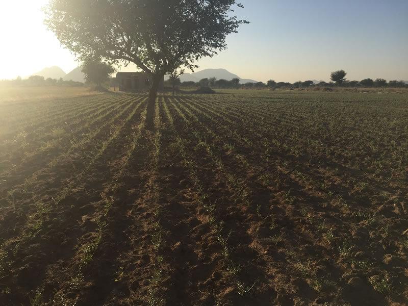 オーガニック農法について