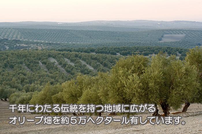 千年にわたる伝統を持つ地域に広がるオリーブ畑を約5万ヘクタール有しています。