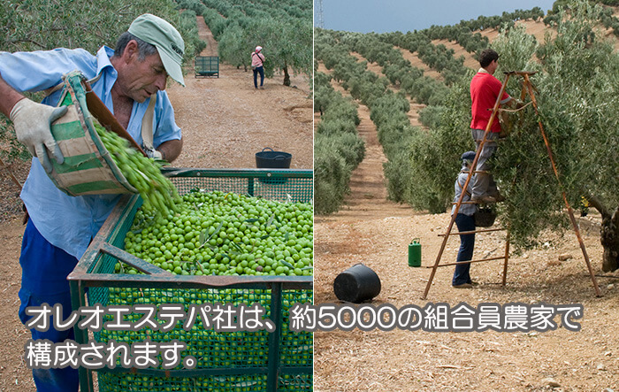 オレオエステパ社は、約5000の組合員農家で構成されます。