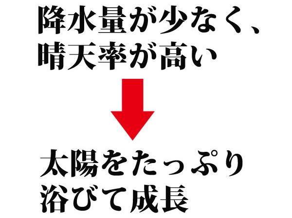 【信州ごま】ねりごま黒 70g