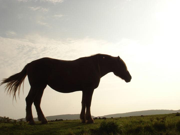 馬イメージ