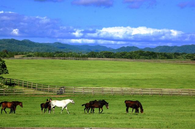 北海道サラブレッド牧場