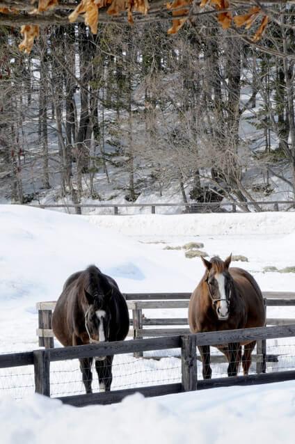 冬の北海道牧場
